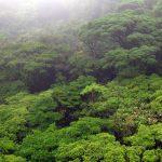 Gouvernance forestière au Cameroun: un atlas interactif pour le suivi des forêts.