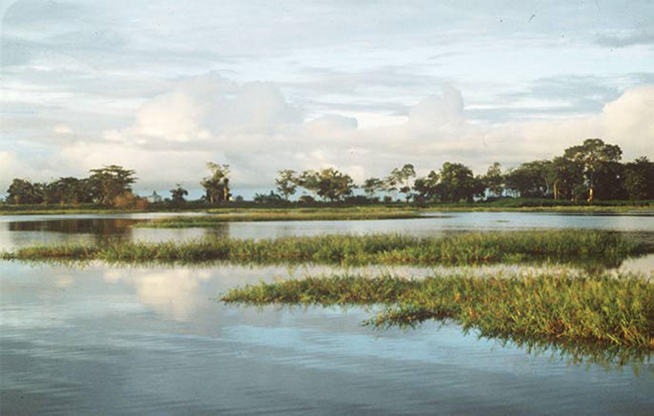 Lake Calado, Amazon.