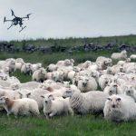 Une nouvelle technologie pour aider les agriculteurs à surveiller brebis et agneaux.